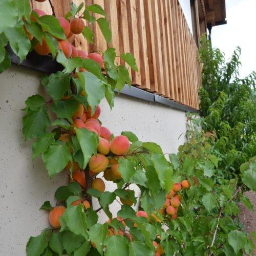 jaiterhof-suedtirol-bauernhofurlaub (14)