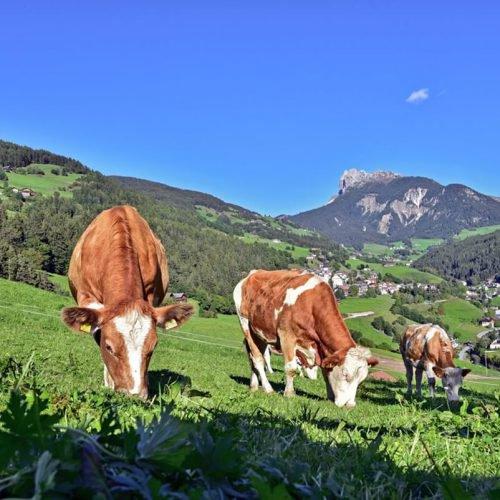 jaiterhof-suedtirol-bauernhofurlaub (18)